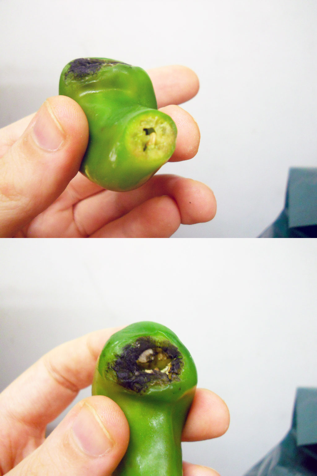 jalapeno_pipe_after